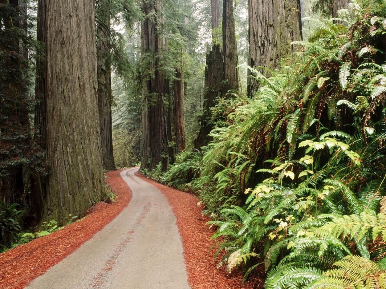 źródło: https://www.socwall.com/desktop-wallpaper/3690/redwood-national-park-california-by-abkcppm/