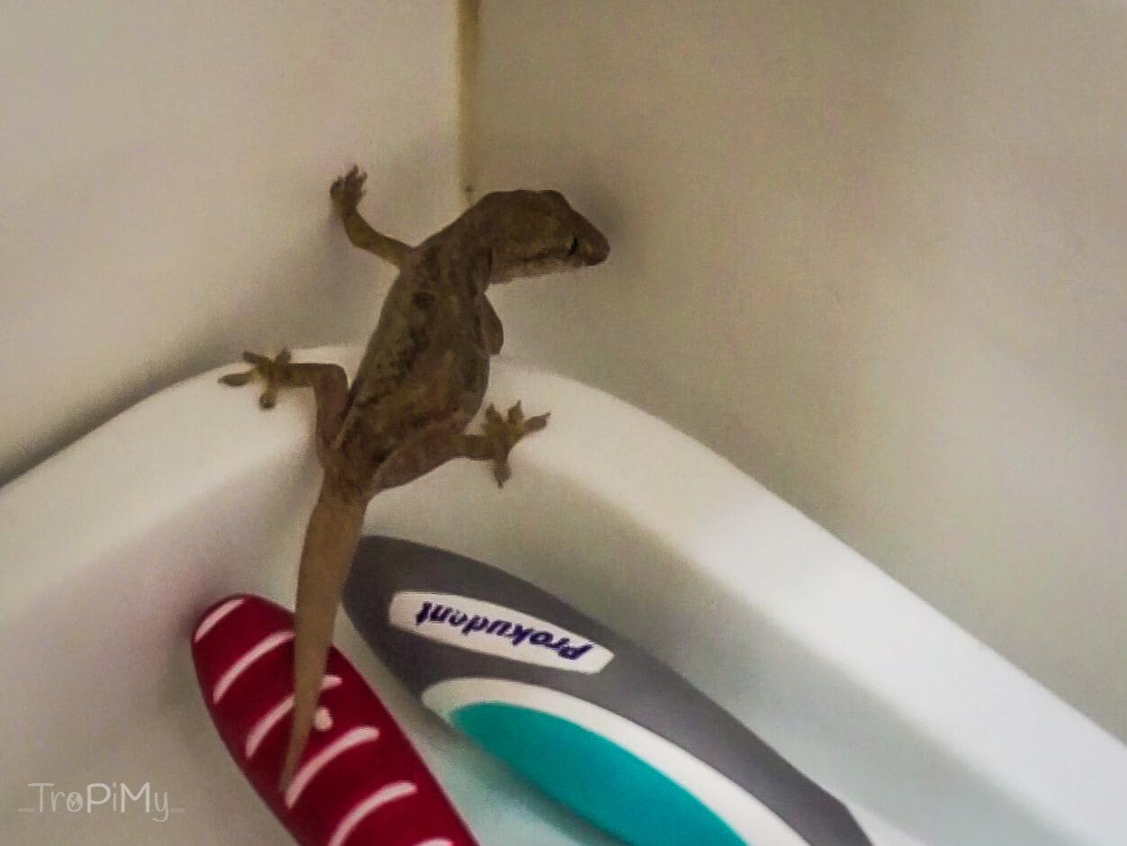 Gekon w naszej łazience