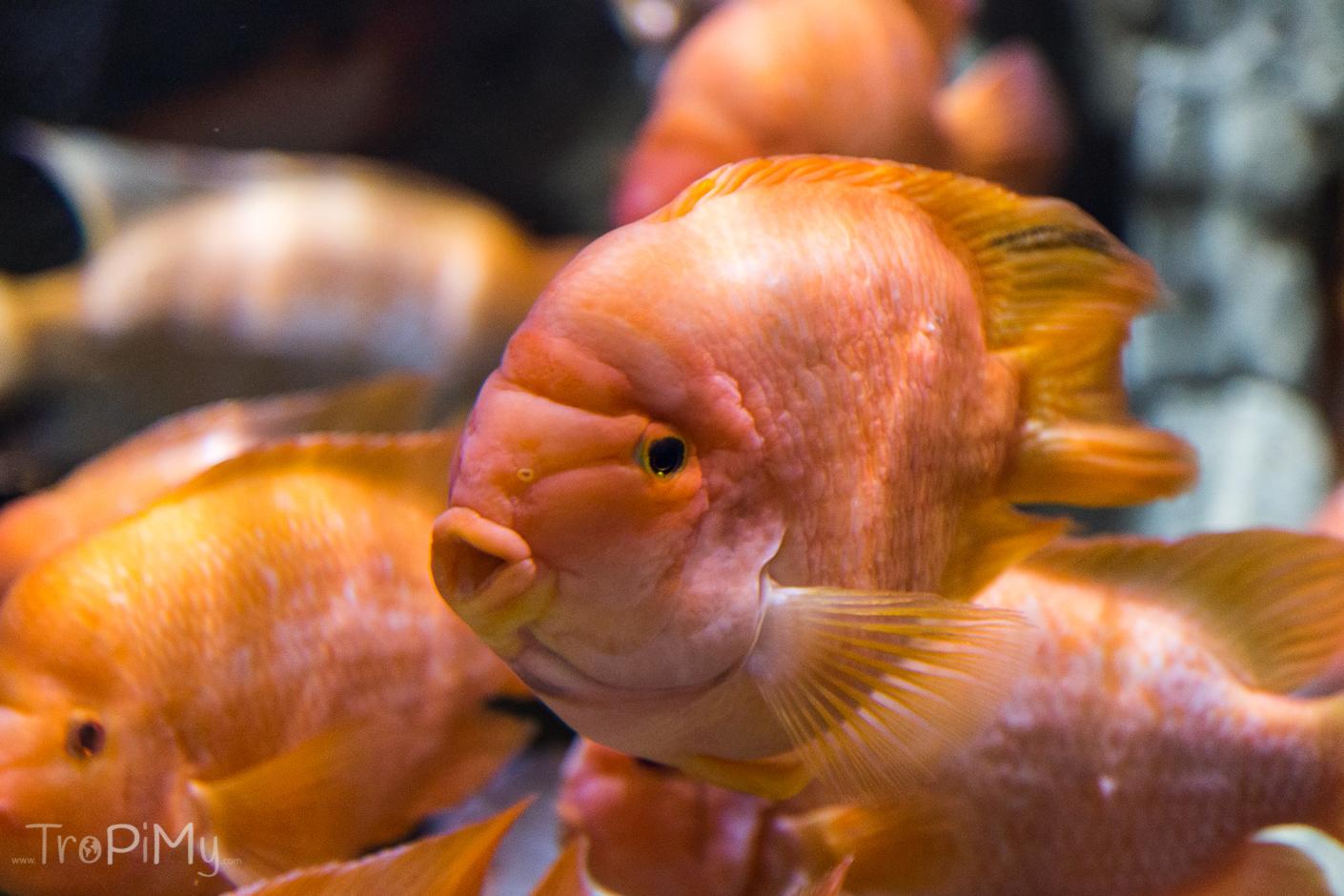 Akwarium w Dubai Mall