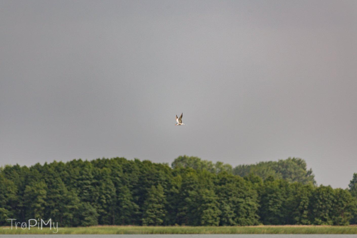 Wigierski Park Narodowy - jezioro Wigry